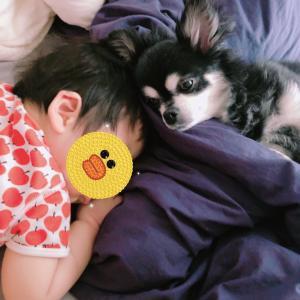赤ちゃんと犬の同居 ヒヤっとしたことや癒されたこと