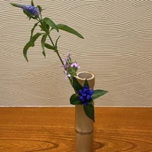 茶花「葉月」