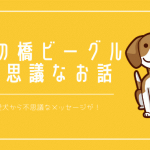 虹の橋にいる愛犬ビーグルから不思議なメッセージが!