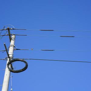 電柱電線に鳥