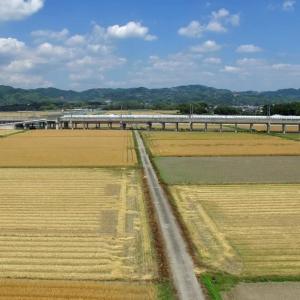 麦田と新幹線
