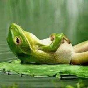 「井の中の蛙大海を知らず」の続き