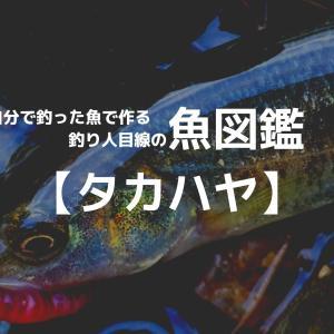 釣り魚図鑑 【タカハヤ】