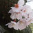 【新型コロナ陽性の共通点】川崎病症状の死者3人に…ニューヨーク州