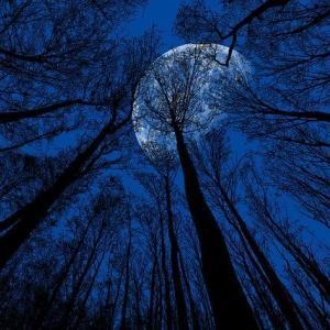月星座の本当の意味