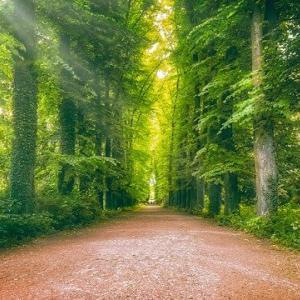 妖精の森の神社 (モカの勝手な命名です)