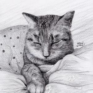 本日、猫デッサンです。