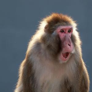 【速報】福岡市都市高速にまたお猿さんが..!現在、博多区の千代ランプ付近。天神には向かっていない模様
