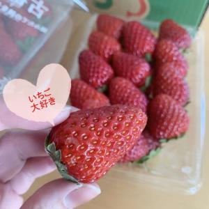 2021年はイチゴが安い!?いちごを楽しむならチャンスかも!奈良県の「古都華(ことか)」おいしいです