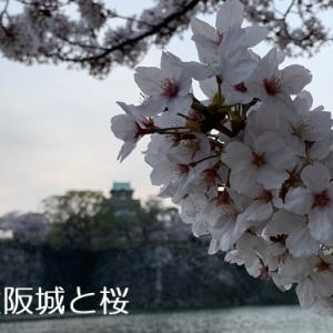 大阪城公園のきれいな桜 通り抜けでお花見