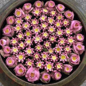 【蓮の花の3つの功徳】
