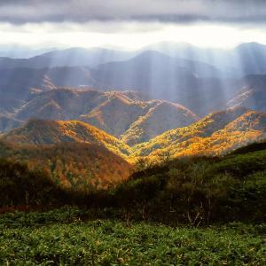 世界遺産(自然遺産)になった白神山地について