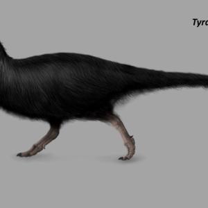 【悲報】恐竜ティラノサウルスだけじゃなくトリケラトプスにも羽毛が生えていた…?イギリスの恐竜博士「見てください。この皮膚の化石を」