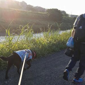 サニーちゃんの夏、爽やか早朝散歩