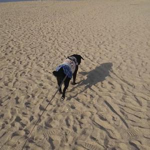 HAPPY SUNNY DAY『It's beach weather』