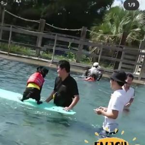【動画】サニーちゃん、ボディボードに乗る①