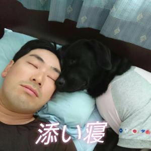 サニーちゃん、おやすみ