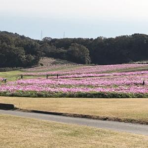 天空の花畑「あわじ花さじき」で癒しの時間!