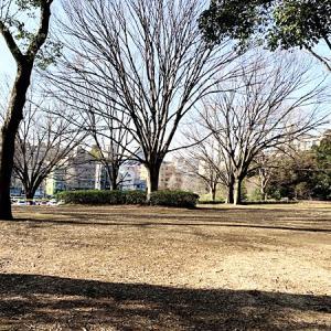 都会のオアシス「代々木公園」へ!