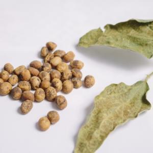料理に使う小麦粉と大豆粉とおからパウダーの糖質量を比べてみた