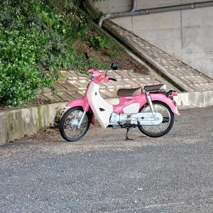 妻とのバイクデート☆スーパーカブ110。帰りに寄ったサンパークあじすでは妻が好きな石が(´ω`*)家につく頃には走行距離500Kmを超えました!
