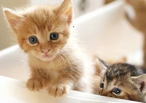 生活保護受給者は犬や猫などのペットを飼うべきではない?【法律上は飼えます】