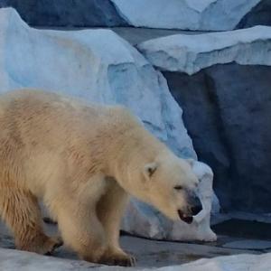 上野動物園の無料入園日は何日?【祝☆パンダの赤ちゃん2頭誕生】