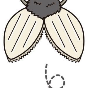 【お風呂にいるハート形の虫】チョウバエはどこから現れるのか