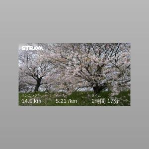 桜並木のおばあちゃん☆