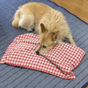 犬用の避難道具をチェックする