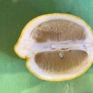 【衝撃】これお店で出てくるやつ!レモンを美しく切る方法!!!