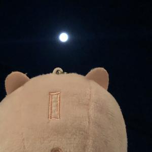 月を見る…ぶたがいる…笑