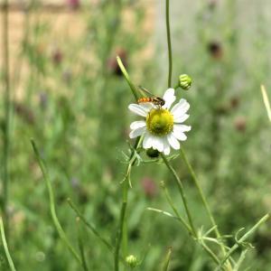 花摘みの小さなライバル
