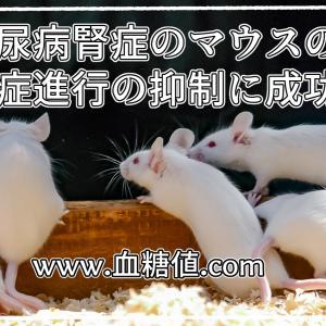 糖尿病腎症のマウスの腎症進行の抑制に成功!