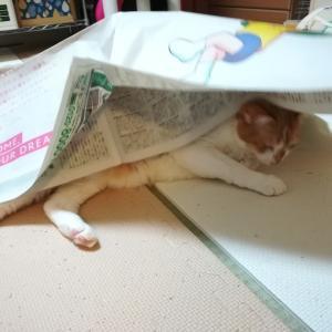 新聞紙のカサカサ好きなのね。