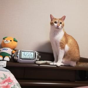 猫探しあれこれ① 子猫?成猫?