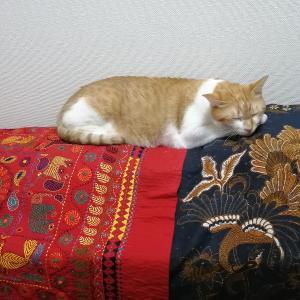 エアコン苦手な猫