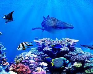 海はミネラルの宝庫