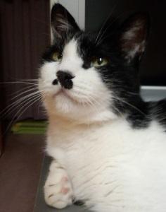 猫の写真をフォトキーホルダーに入れて身に付けよう