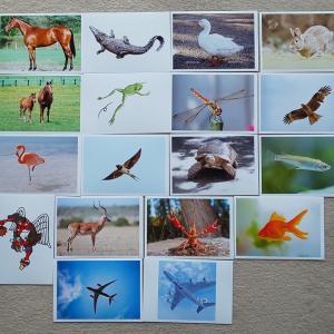リトミックの動物イメージを動物写真カードを見せて助ける
