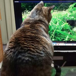 養老孟司先生と猫のまるちゃんのスペシャルな関係