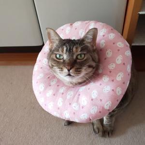 猫のダニアレルギー対策 0円で済む安くて効果的な方法