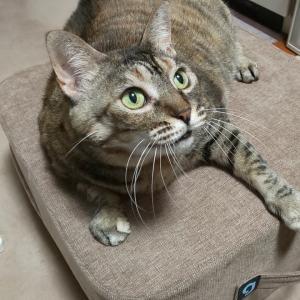 初めて保護猫ちゃんを飼うのに最初に用意するグッズ7点