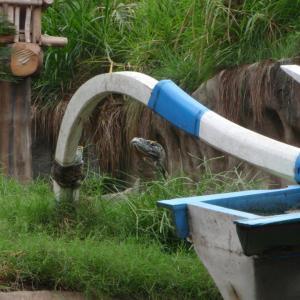 東ヌサ・トンガラ州知事が住民が餓死するよりコロナウイルスに対峙したした方が良いと、来月15日より観光客受け入れの開始を決定