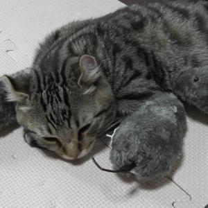 3匹のネズミと子猫クッキー