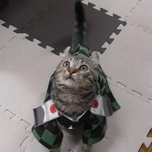 初めてのコスプレした子猫【鬼滅の刃】