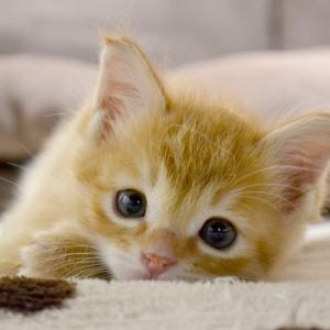 猫の抜け毛の量に違いがある?快適な抜け毛対策とは。