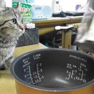 お釜でも何でも入る子猫