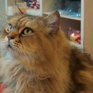扇風機は熱中症に効果ないの?猫にとって良い対策方法とは。