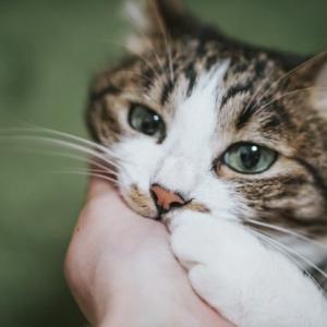 なぜ猫が朝早くに起こすの?起こされて寝不足!にならないための対策法